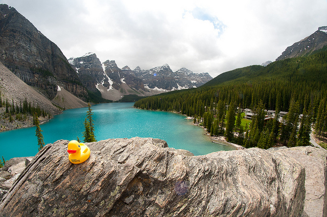 Duck at the lake